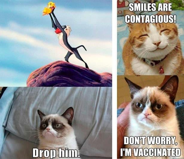 gotta love grumpy cat