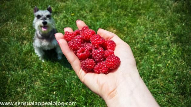 raspberries and my dog