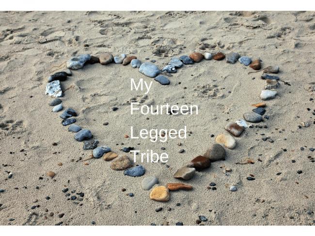 My Fourteen Legged Tribe